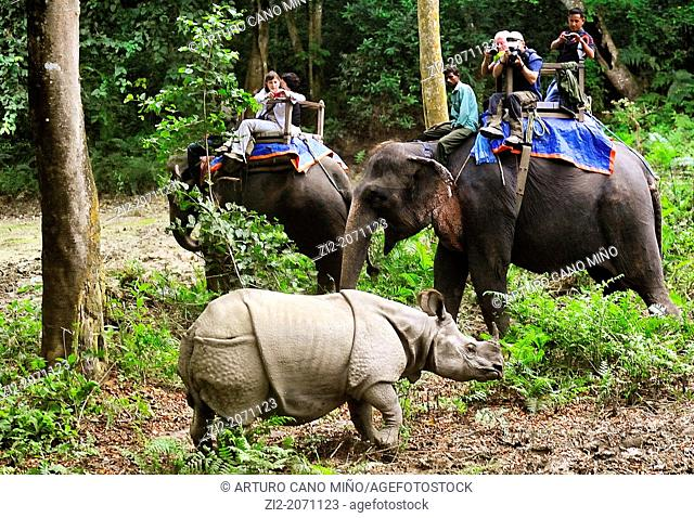 Tourists observing an Indian rhinoceros Rhinoceros unicornis from an elephant, Chitwan National Park, Nepal