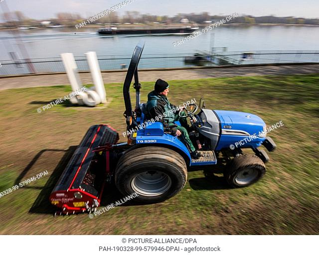 28 March 2019, Rhineland-Palatinate, Mainz: A special device loosens up the lawn. The city of Mainz is carrying out regeneration measures on the banks of the...