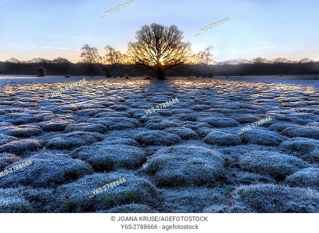 Balmer Lawn in sunrise, Brockenhurst, New Forest, Hampshire, England, UK