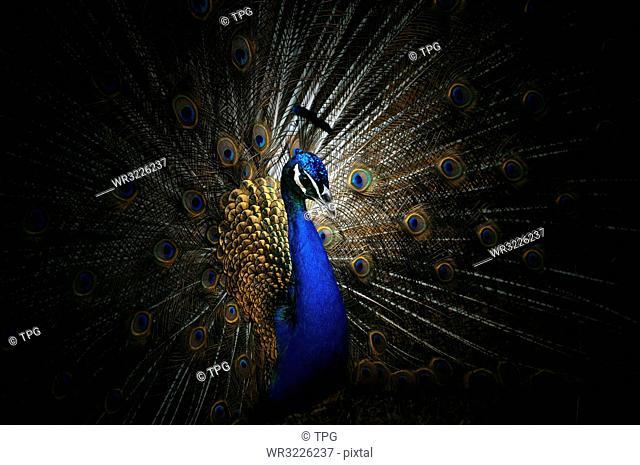 Abstract animal