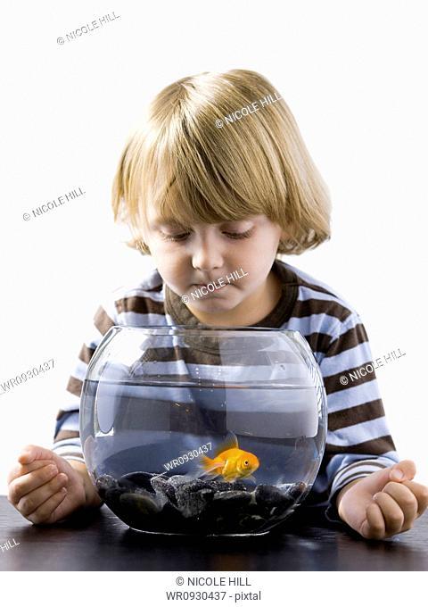 USA, Utah, Provo, Boy 2-3 watching goldfish in bowl