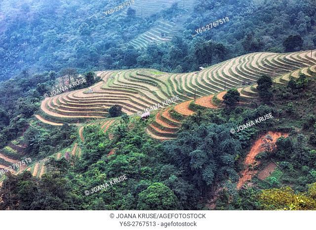 Rice terraces, Lao Chai, Sapa, Vietnam, Asia