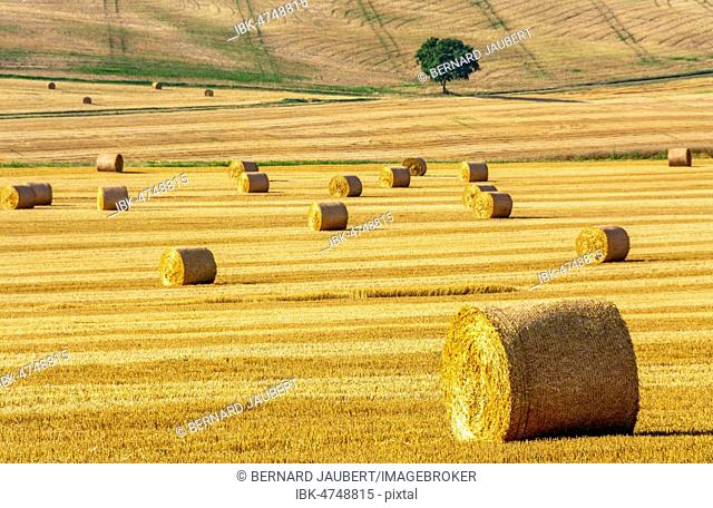Bales of straw, hay bales in region Limagne, Puy de Dome department, Auvergne Rhone Alpes, France