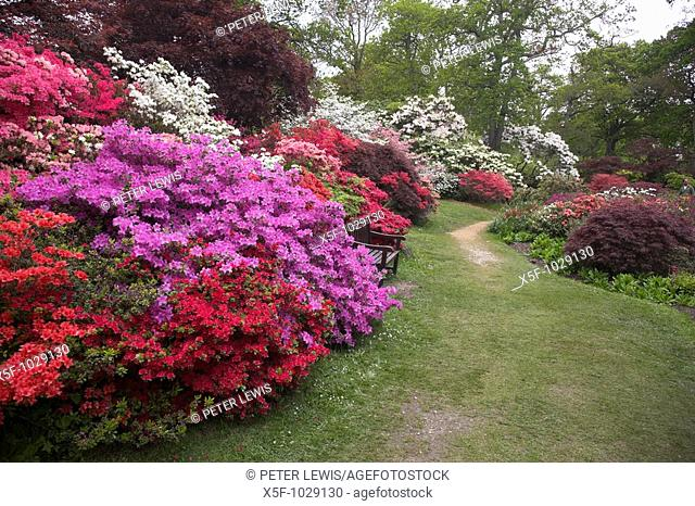 The World Famous Exbury Gardens famous for there magnificent displays of Azalea and Rhododendron Exbury New Forest Hampshire