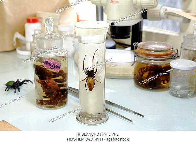 France, Paris, National Museum of Natural History, collection of spiders in alcohol