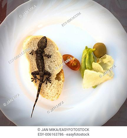 Lizard and bread with vegetable on plate