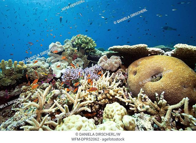 Species-rich Coral Reef, Namena Marine Reserve, Fiji
