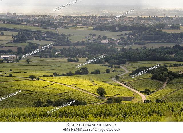 France, Saone et Loire, surroundings of Solutre Pouilly, Maconnais vineyard