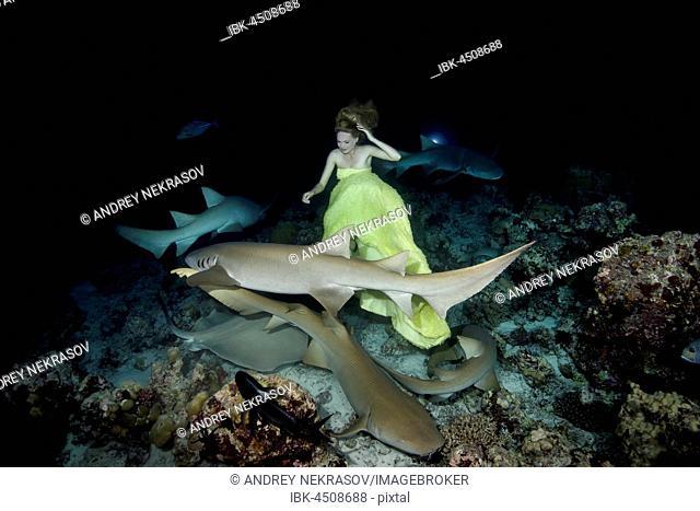 Beautiful woman in yellow dress posing underwater with Tawny nurse sharks (Nebrius ferrugineus), night shooting, Indian Ocean, Maldives