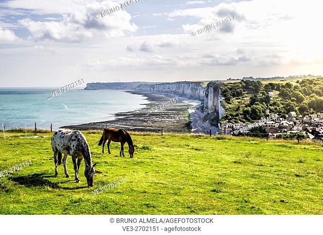 Horses grazing in cliffs of Yport. In the background Fécamp (department of Seine-Maritime, region of Normandie, France)
