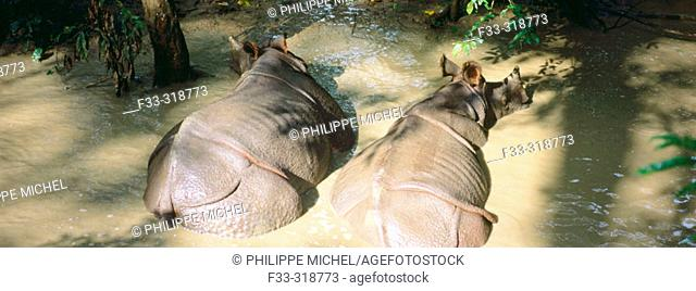 Rhinoceroses at Royal Chitwan National Park. Terai, Nepal