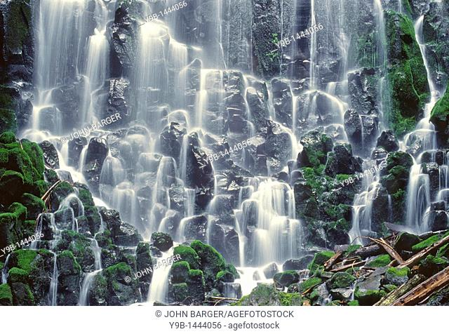 Ramona Falls is formed by a small creek tumbling over a mossy cliff of columnar basalt, Mt  Hood Wilderness, Mt  Hood National Forest, Oregon, USA
