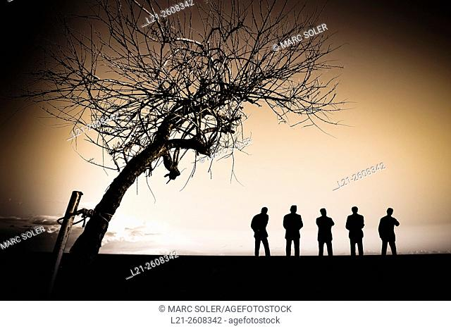Tree and silhouettes of men at sunset