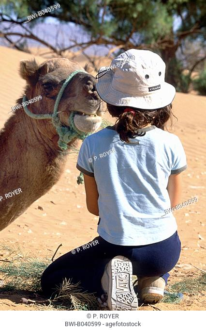 dromedary, one-humped camel (Camelus dromedarius), young girl kneeing in front of sitting dromedary, at eye level, animal looking into child's face, Morocco