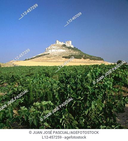 Ribera del Duero vineyards and castle, Peñafiel. Valladolid province, Castilla-León, Spain