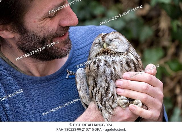 23 February 2018, Germany, Leiferde: Joachim Neumann carries a tawny owl at the NABU (German Nature and Biodiversity Conservation Union) center for protection...