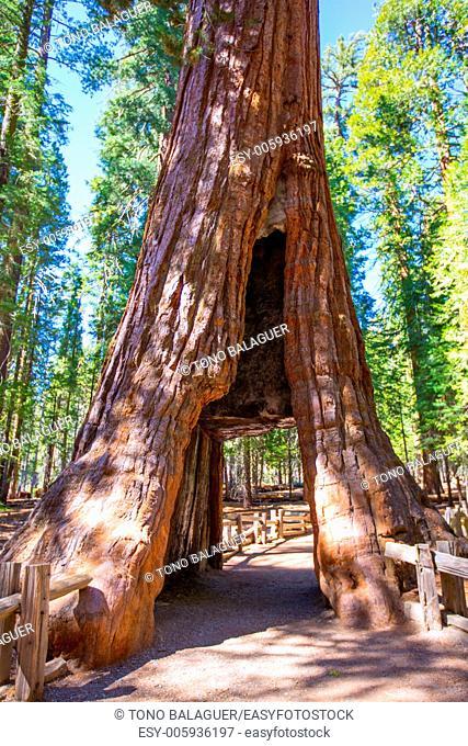 Sequoia Gate in Mariposa grove at Yosemite National Park California