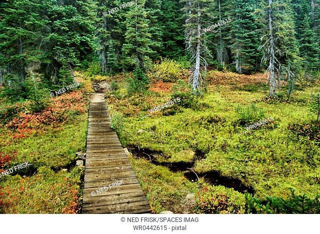Wooden Foot Bridge Over Stream
