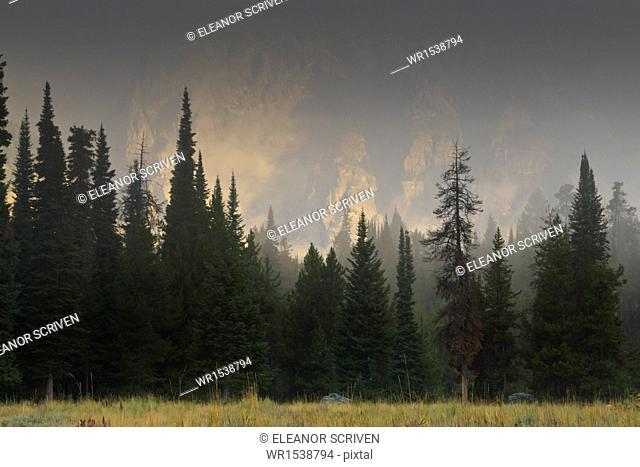 Hazy Teton Range and pine trees near Phelps Lake, Grand Teton National Park, Wyoming, United States of America, North America