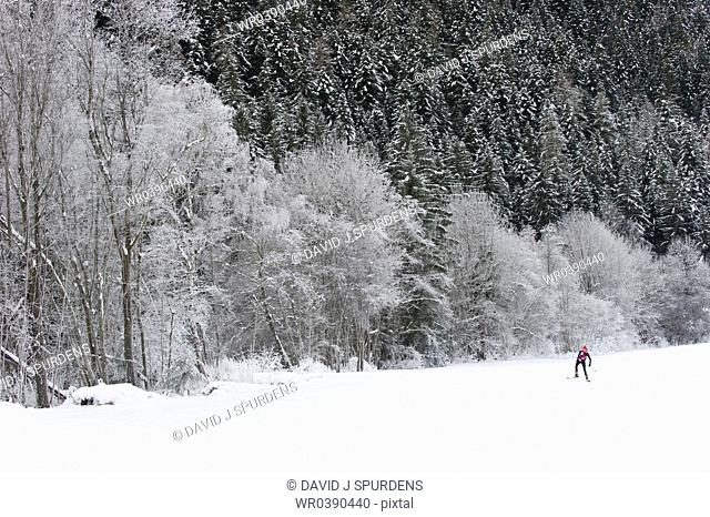 Cross country skier beside snowy forest