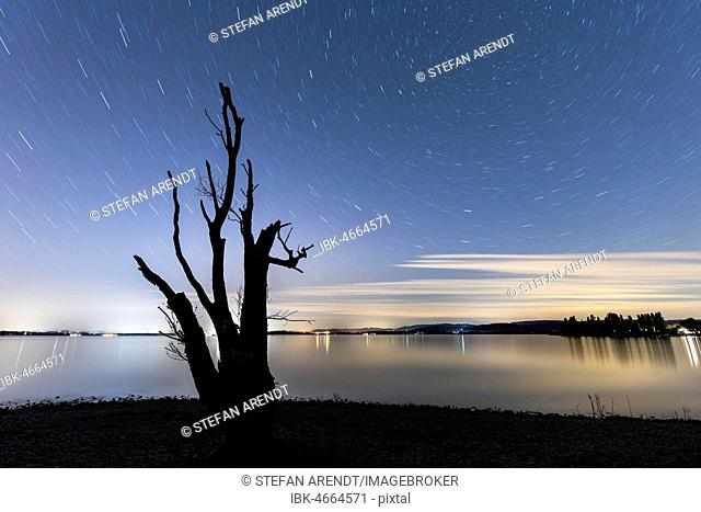Starry sky over Lake Constance, in front silhouette of bare tree, Island Reichenau, Baden-Württemberg, Germany