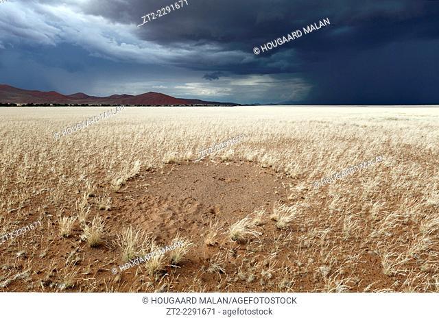 Landscape photo of a fairy circle in ivory grass below a dark rain cloud. Sossusvlei, Namib Naukluft National Park, Namibia