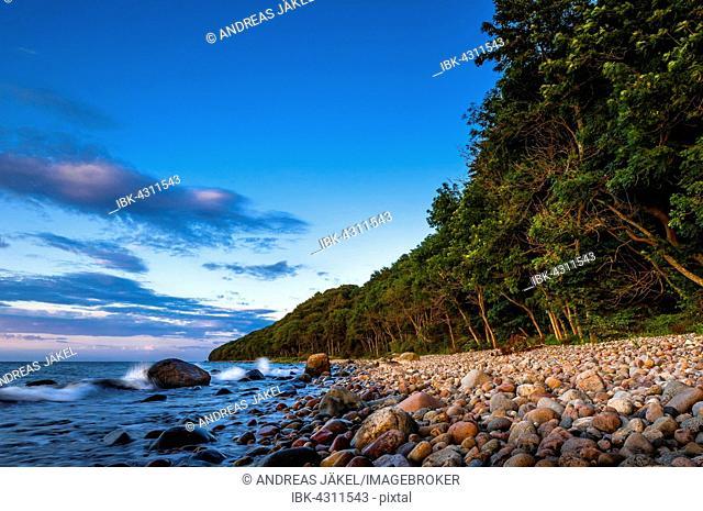 Stony beach with coastal forest, Baltic Sea, Jasmund National Park, Jasmund peninsula, Rügen Island, Mecklenburg Vorpommern, Germany