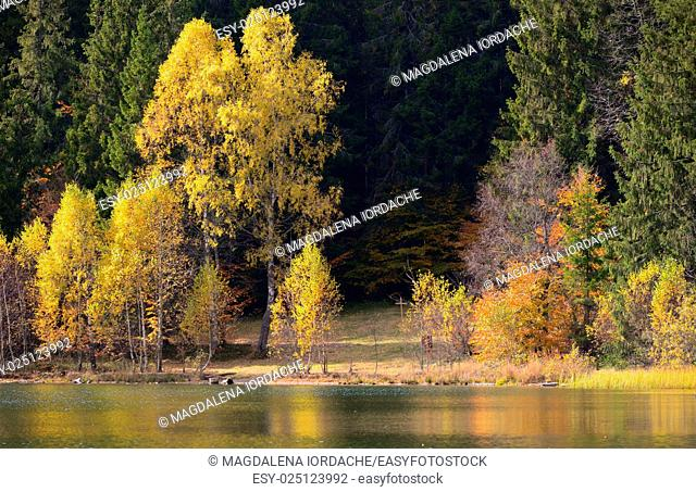 Autumn with the yellow foliage, reflected in Lake Saint Ann