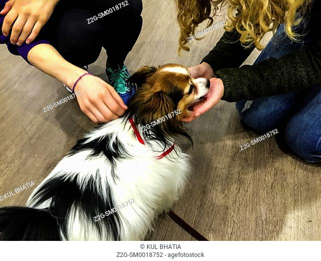 Two young persons de-stress with a therapy dog, Ontario, Canada