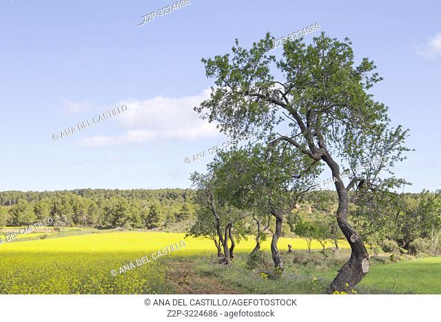 Spring landscape Matarrana county in Teruel Aragon Spain