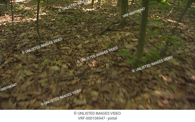 POV of walking through the woods