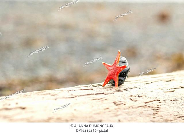 Star beach driftwood Stock Photos and Images | age fotostock