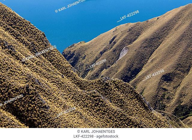 Mountain walk up Mt Roy with tussock grasslands, Lake Wanaka, South Island, New Zealand