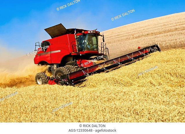 A Combine Harvests Grain On The Hills Of The Palouse Region Of Washington; Washington, United States Of America