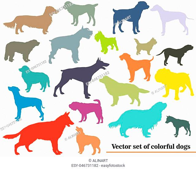 Vector set of colorful isolated different breeds dogs silhouettes on white backround