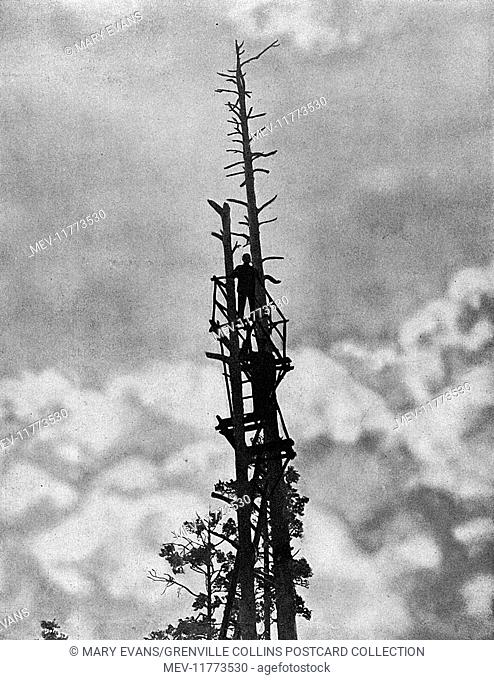 Russian soldiers up a tree used as a lookout post on the eastern front during the First World War