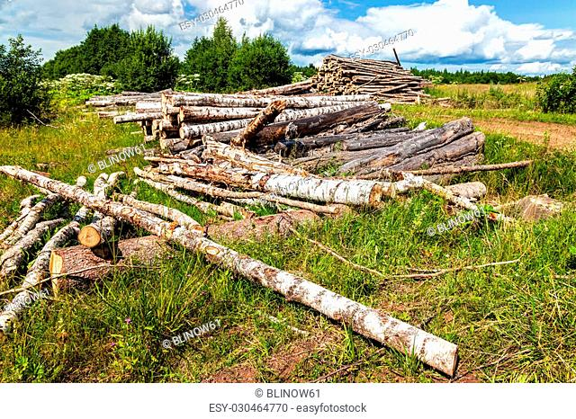 Cut tree logs piled up near a forest road in summertime