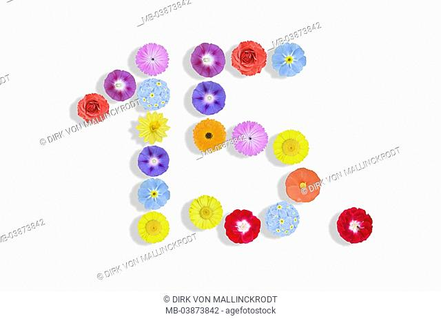 Blooms, differently, colorfully, order, number, 15 , M series, flowers, petals, bloom-heads, scent, colors, coloring, forms, concept, spring-greetingses, spring