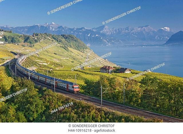 Lake, canton, Vaud, Waadt, Switzerland, Europe, Western Switzerland, Lake Geneva, agriculture, wine, shoots, vineyard, wine cultivation, Lavaux, Leman, railroad