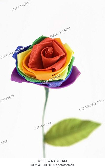 Close-up of a colorful flower representing Gay symbol