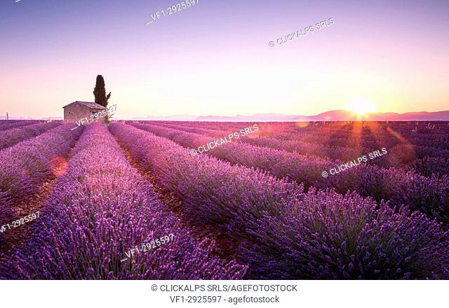 Sunrise in Plateau de Valensole, Provence - Cote d'Azur, France