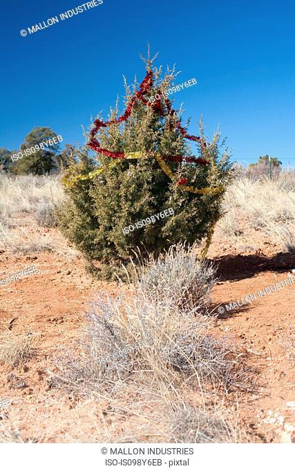Bush with tinsel in the desert, Moab, Utah, USA