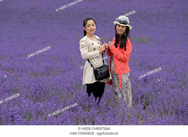 Europe, France, Provence, Vaucluse, asian, girls, hat, woman, women, lavender, bloom, field, young two