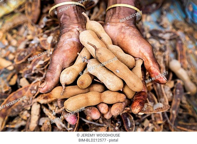 Close up of woman's hands cupping tamarind seeds