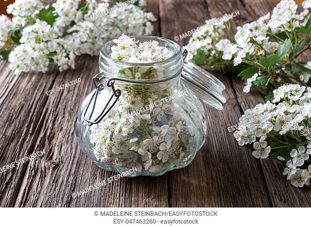 Preparation of herbal tincture from fresh hawthorn flowers