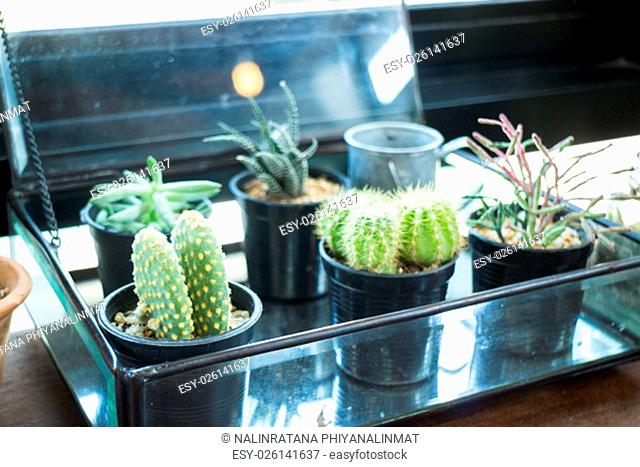 Small plant pot displayed beside the window, stock photo