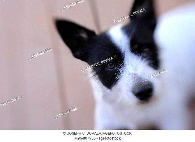Terrier mix dog selective focus