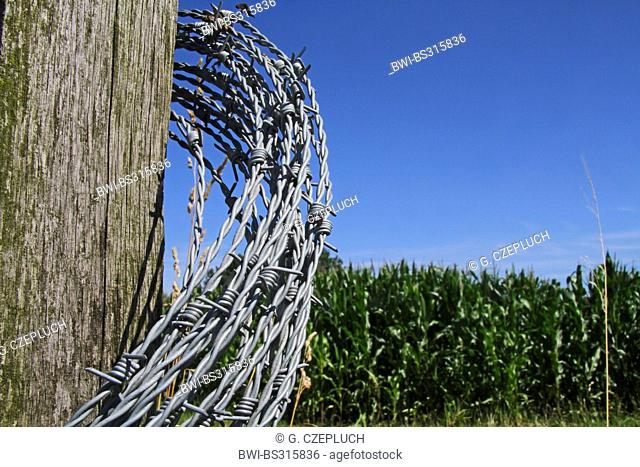fence post and barbed wire fence coil in front of maize field, Germany, North Rhine-Westphalia
