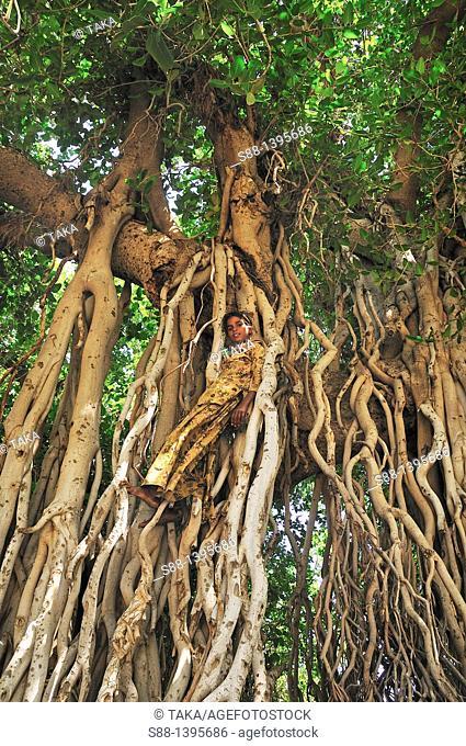 Girl in the big tree