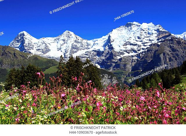 Alp, alps, flora, view, mountain, mountain panorama, mountains, mountain flora, mountain spring, mountain massif, mountain panorama, mountain wall, Bern